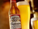 Calgary, Canada - April 5, 2011: A 12oz, American Bottle and Glass of Budweiser Beer shot in a Bar Setting, Budweiser is made by the Anheuser-Busch Company.